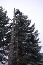 Baum kahl, Spitze gefällt