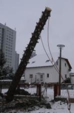 Fallender Baum