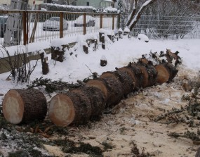 gefallender und zersägter Baum