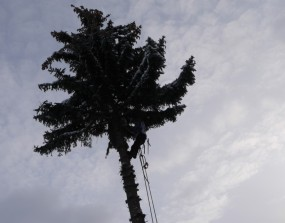 oben auf dem Baum
