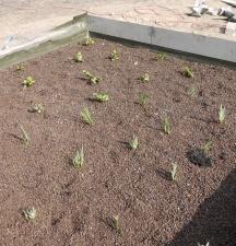 Pflanzen gepflanzt