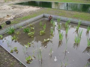 Erhöhung der Pflanzendichte im Regenerationsbereich