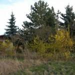 Grundstück - Foto 2