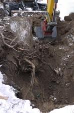 Wurzel ausgraben